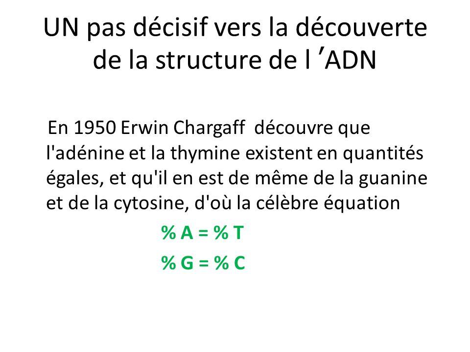 UN pas décisif vers la découverte de la structure de l ADN En 1950 Erwin Chargaff découvre que l'adénine et la thymine existent en quantités égales, e