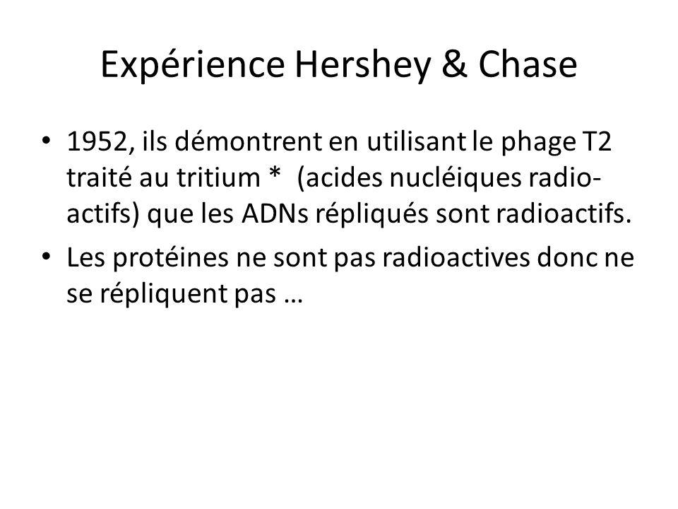 Expérience Hershey & Chase 1952, ils démontrent en utilisant le phage T2 traité au tritium * (acides nucléiques radio- actifs) que les ADNs répliqués