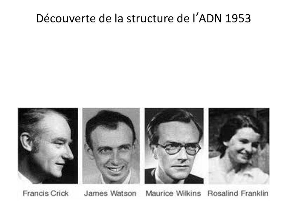 Découverte de la structure de lADN 1953