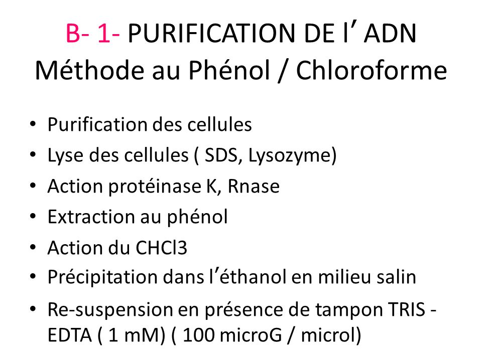 B- 1- PURIFICATION DE l ADN Méthode au Phénol / Chloroforme Purification des cellules Lyse des cellules ( SDS, Lysozyme) Action protéinase K, Rnase Ex