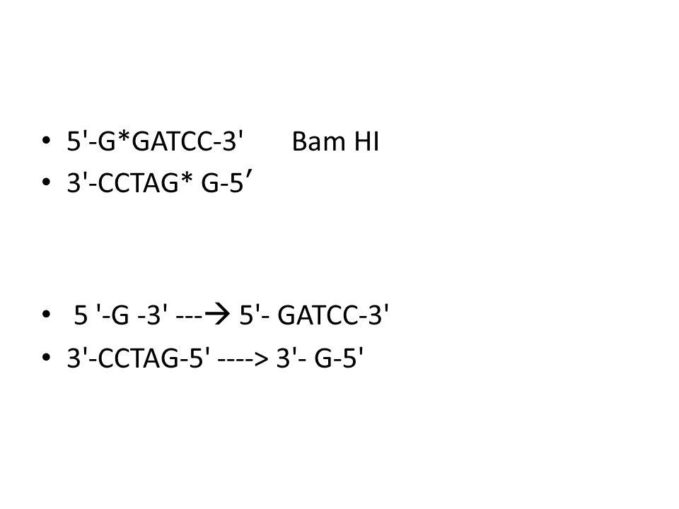 5'-G*GATCC-3' Bam HI 3'-CCTAG* G-5 5 '-G -3' --- 5'- GATCC-3' 3'-CCTAG-5' ----> 3'- G-5'