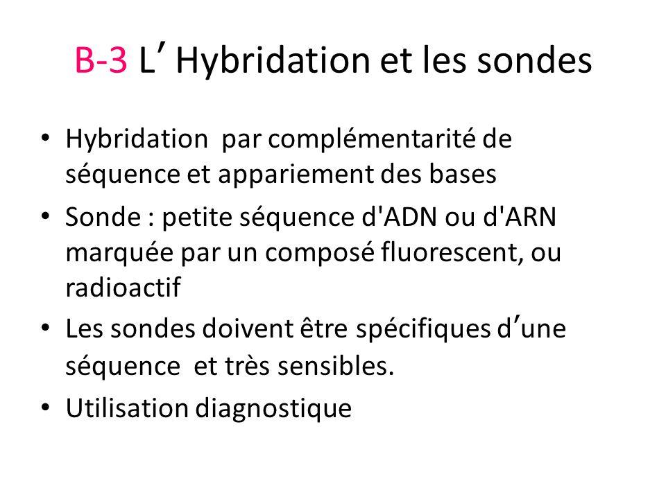 B-3 L Hybridation et les sondes Hybridation par complémentarité de séquence et appariement des bases Sonde : petite séquence d'ADN ou d'ARN marquée pa