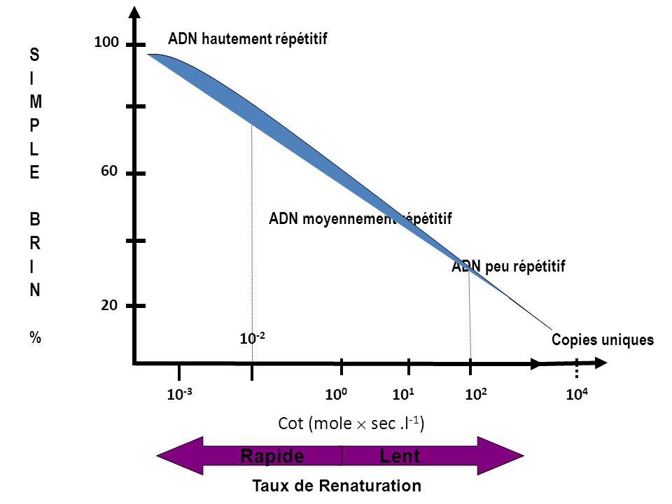 10 -3 10 4 10 1 10 0 10 -2 10 2 20 100 60 RapideLent Taux de Renaturation SIMPLEBRIN%SIMPLEBRIN% Cot (mole sec.l -1 ) ADN hautement répétitif ADN moye