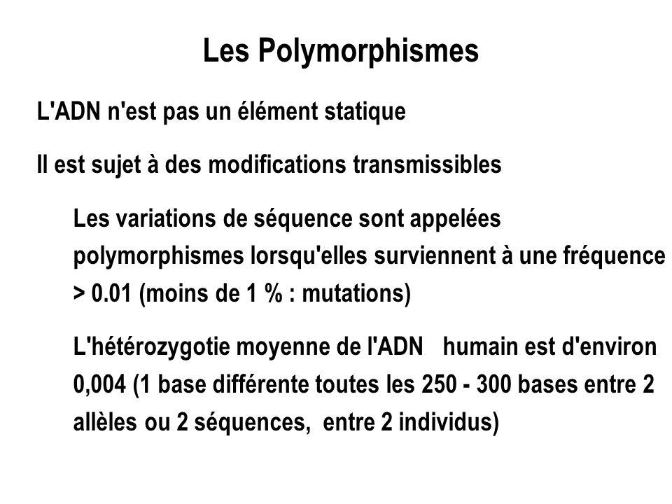L'ADN n'est pas un élément statique Il est sujet à des modifications transmissibles Les variations de séquence sont appelées polymorphismes lorsqu'ell