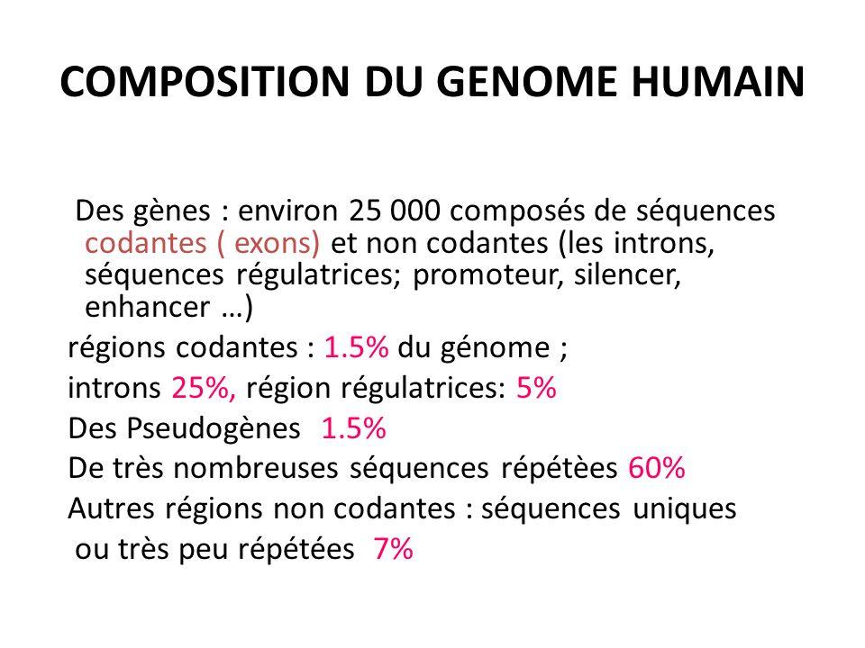 COMPOSITION DU GENOME HUMAIN Des gènes : environ 25 000 composés de séquences codantes ( exons) et non codantes (les introns, séquences régulatrices;