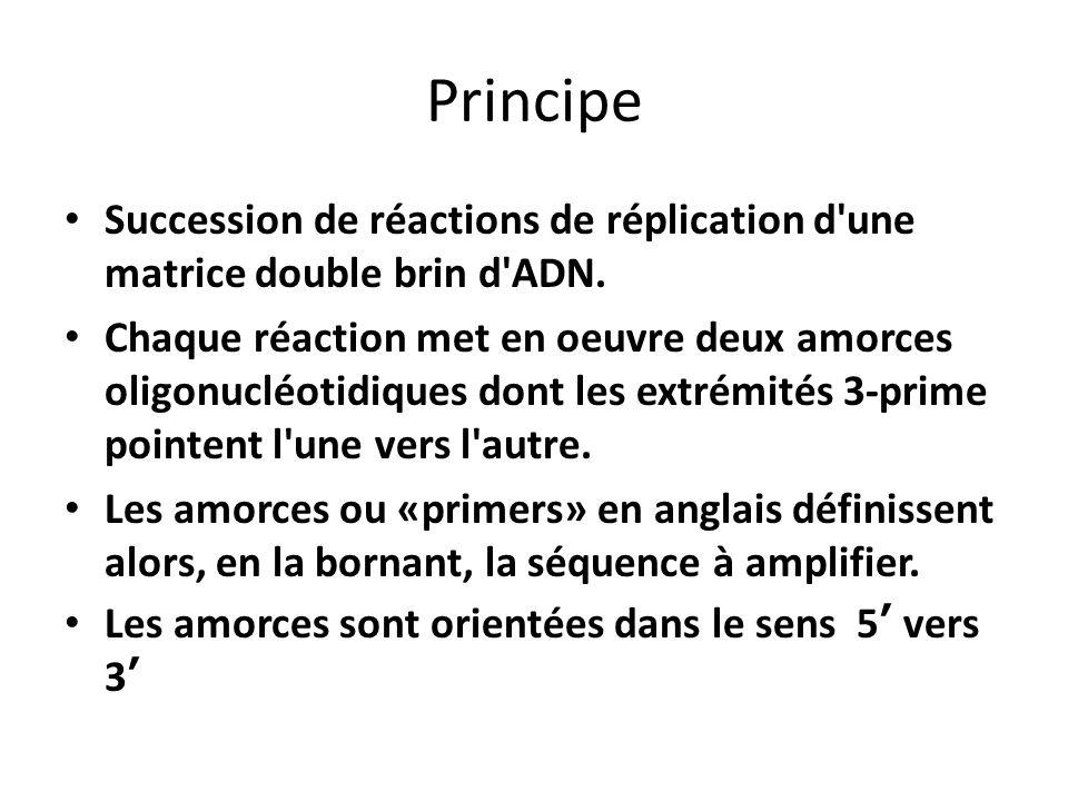 Principe Succession de réactions de réplication d'une matrice double brin d'ADN. Chaque réaction met en oeuvre deux amorces oligonucléotidiques dont l