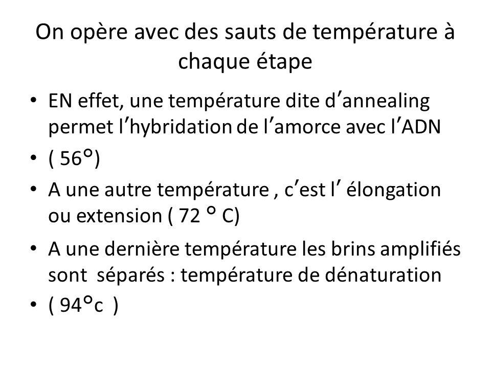 On opère avec des sauts de température à chaque étape EN effet, une température dite dannealing permet lhybridation de lamorce avec lADN ( 56°) A une