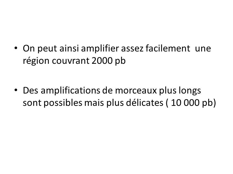 On peut ainsi amplifier assez facilement une région couvrant 2000 pb Des amplifications de morceaux plus longs sont possibles mais plus délicates ( 10