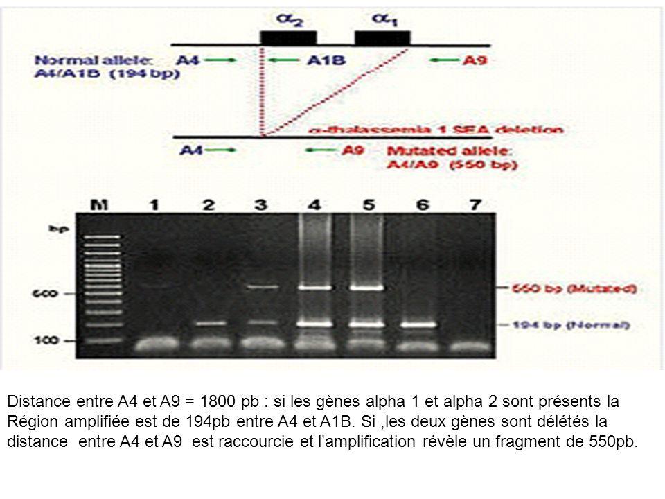 Distance entre A4 et A9 = 1800 pb : si les gènes alpha 1 et alpha 2 sont présents la Région amplifiée est de 194pb entre A4 et A1B. Si,les deux gènes