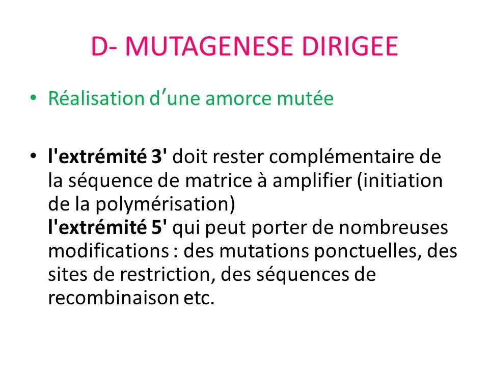 D- MUTAGENESE DIRIGEE Réalisation dune amorce mutée l'extrémité 3' doit rester complémentaire de la séquence de matrice à amplifier (initiation de la