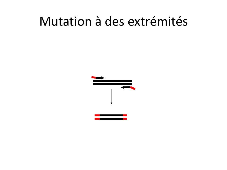 Mutation à des extrémités