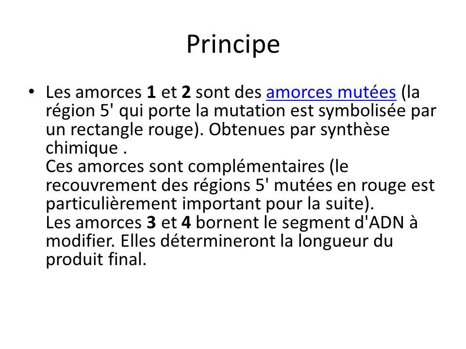 Principe Les amorces 1 et 2 sont des amorces mutées (la région 5' qui porte la mutation est symbolisée par un rectangle rouge). Obtenues par synthèse