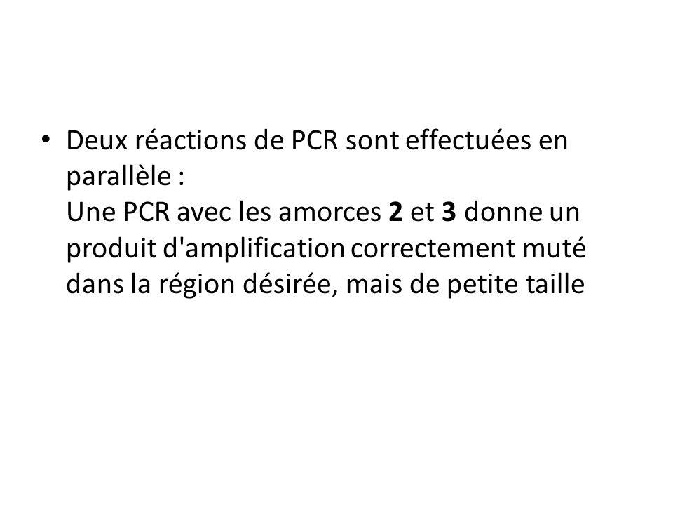 Deux réactions de PCR sont effectuées en parallèle : Une PCR avec les amorces 2 et 3 donne un produit d'amplification correctement muté dans la région