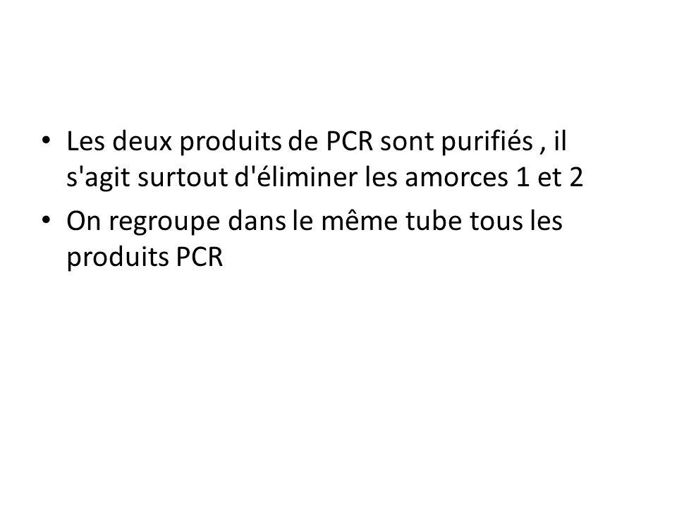 Les deux produits de PCR sont purifiés, il s'agit surtout d'éliminer les amorces 1 et 2 On regroupe dans le même tube tous les produits PCR