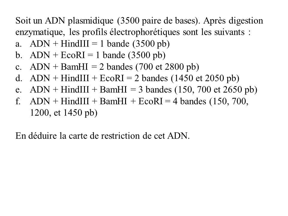 Soit un ADN plasmidique (3500 paire de bases). Après digestion enzymatique, les profils électrophorétiques sont les suivants : a.ADN + HindIII = 1 ban