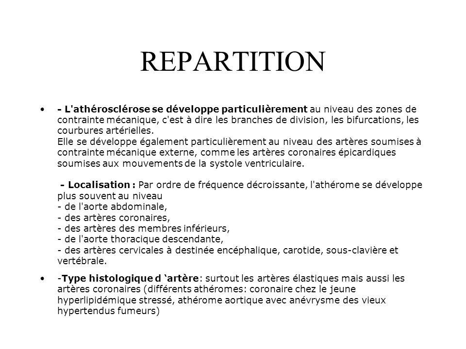 REPARTITION - L'athérosclérose se développe particulièrement au niveau des zones de contrainte mécanique, c'est à dire les branches de division, les b