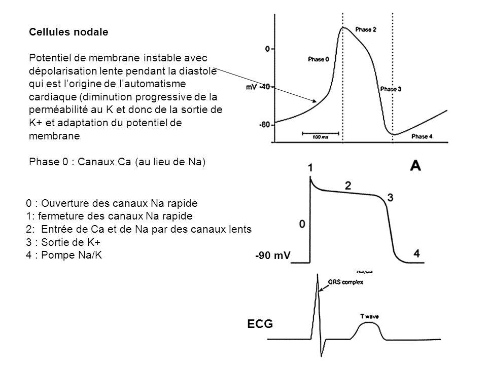 -90 mV ECG Cellules nodale Potentiel de membrane instable avec dépolarisation lente pendant la diastole qui est lorigine de lautomatisme cardiaque (di