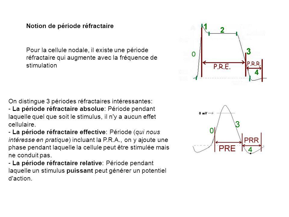 Notion de période réfractaire Pour la cellule nodale, il existe une période réfractaire qui augmente avec la fréquence de stimulation On distingue 3 p