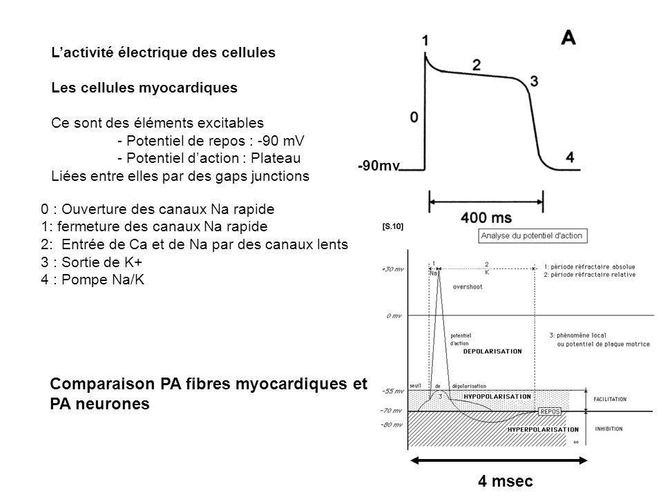 Lactivité électrique des cellules Les cellules myocardiques Ce sont des éléments excitables - Potentiel de repos : -90 mV - Potentiel daction : Platea