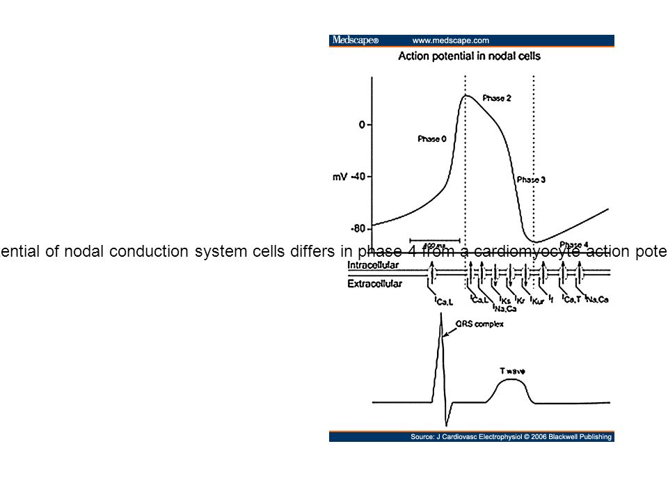 Action potential in nodal cells. The action potential of nodal conduction system cells differs in phase 4 from a cardiomyocyte action potential (upper