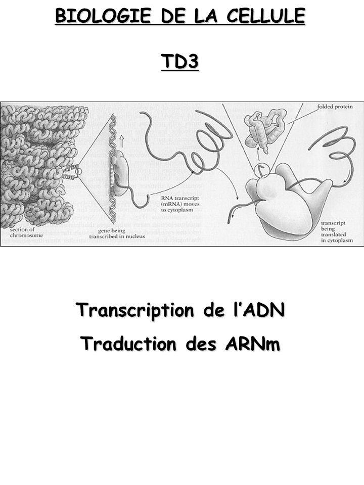 BIOLOGIE DE LA CELLULE TD3 Transcription de lADN Traduction des ARNm