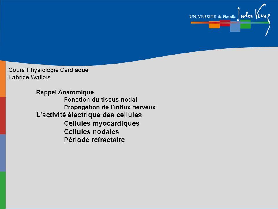 Cours Physiologie Cardiaque Fabrice Wallois Rappel Anatomique Fonction du tissus nodal Propagation de linflux nerveux Lactivité électrique des cellule