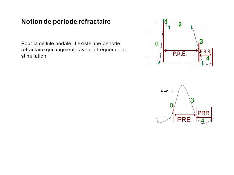 Notion de période réfractaire Pour la cellule nodale, il existe une période réfractaire qui augmente avec la fréquence de stimulation
