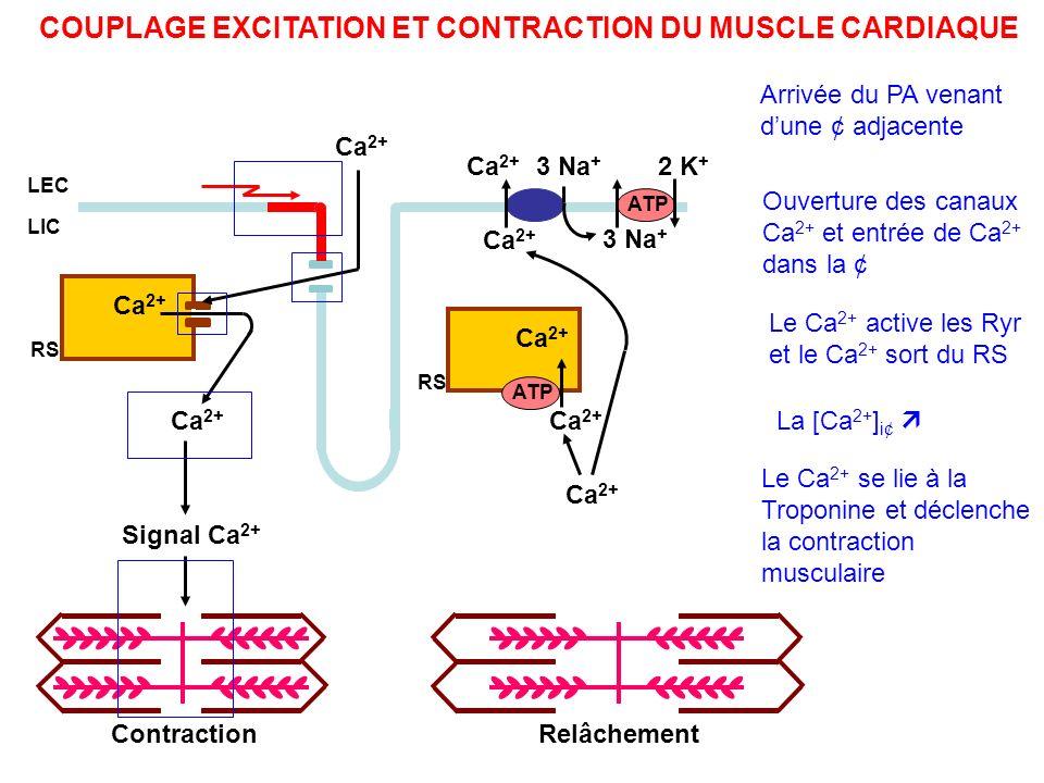 COUPLAGE EXCITATION ET CONTRACTION DU MUSCLE CARDIAQUE Ca 2+ Signal Ca 2+ Ca 2+ ATP Ca 2+ ATP 3 Na + 2 K + ContractionRelâchement RS LEC LIC Arrivée d