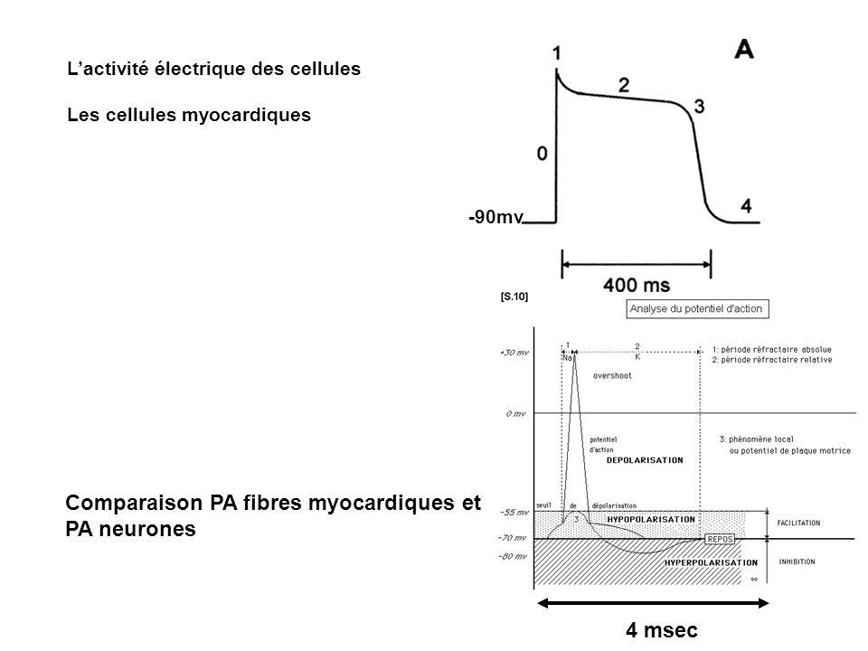 Lactivité électrique des cellules Les cellules myocardiques 4 msec -90mv Comparaison PA fibres myocardiques et PA neurones