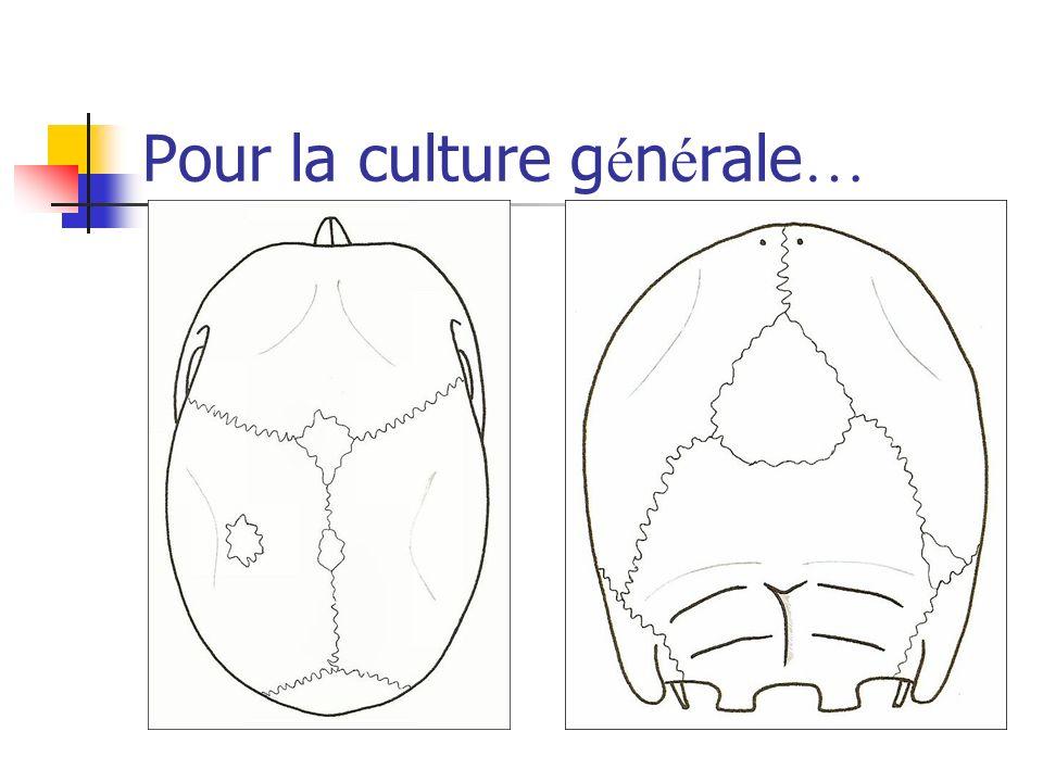 Pour la culture g é n é rale …