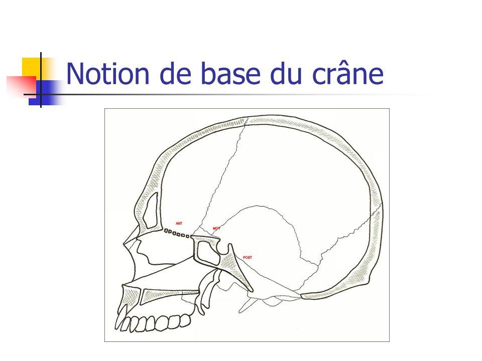 Notion de base du crâne
