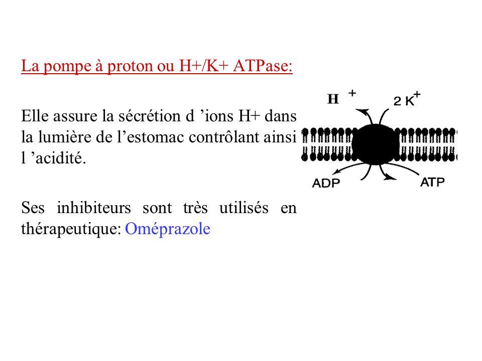 La pompe à proton ou H+/K+ ATPase: Elle assure la sécrétion d ions H+ dans la lumière de lestomac contrôlant ainsi l acidité. Ses inhibiteurs sont trè