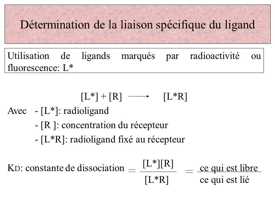 Détermination de la liaison spécifique du ligand Utilisation de ligands marqués par radioactivité ou fluorescence: L* [L*] + [R][L*R] Avec - [L*]: rad