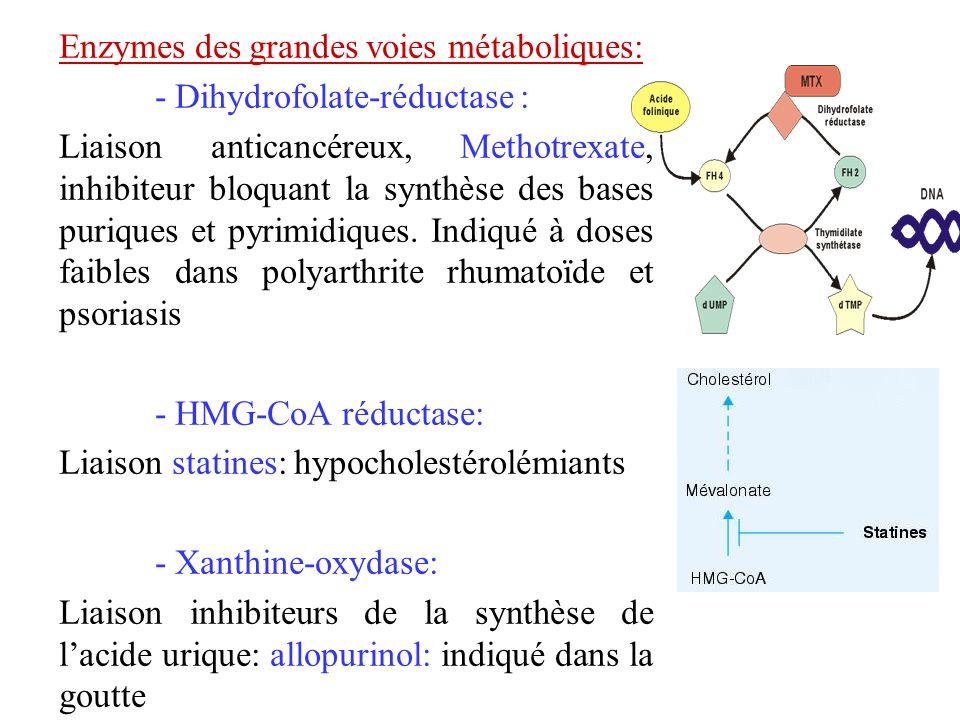 Enzymes des grandes voies métaboliques: - Dihydrofolate-réductase : Liaison anticancéreux, Methotrexate, inhibiteur bloquant la synthèse des bases pur