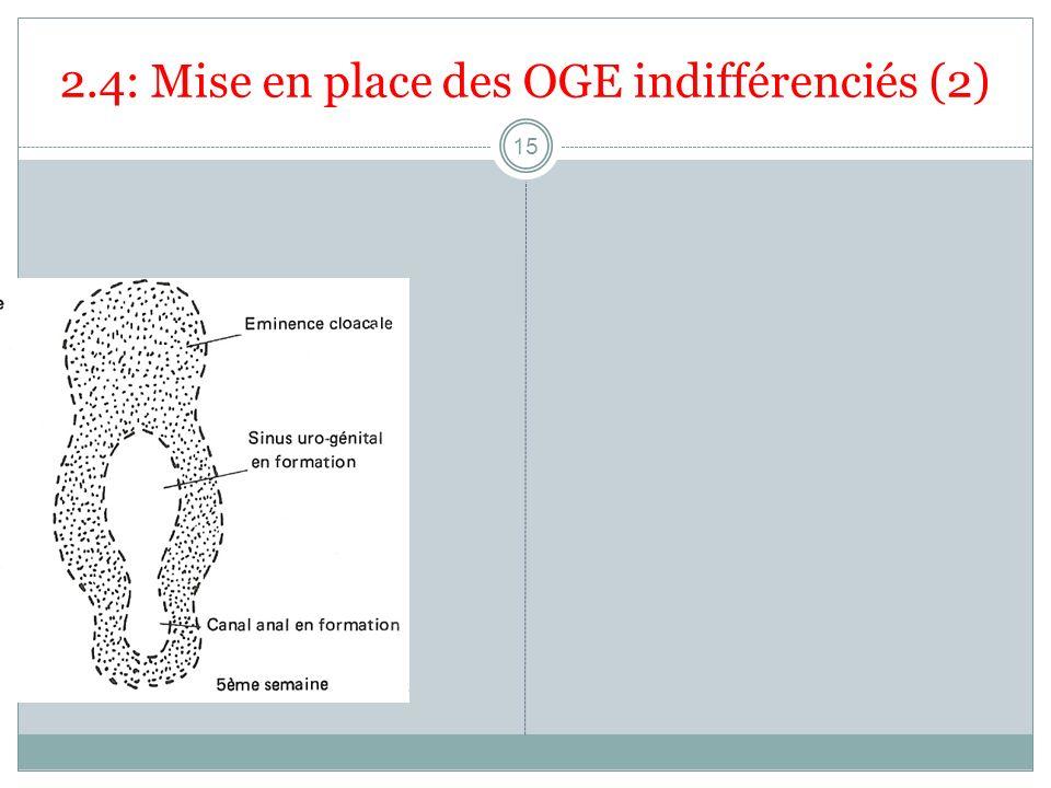 2.4: Mise en place des OGE indifférenciés (2) 15
