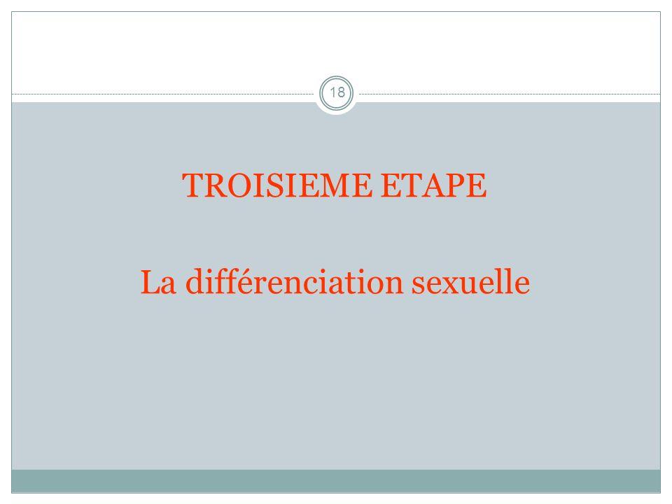 18 TROISIEME ETAPE La différenciation sexuelle