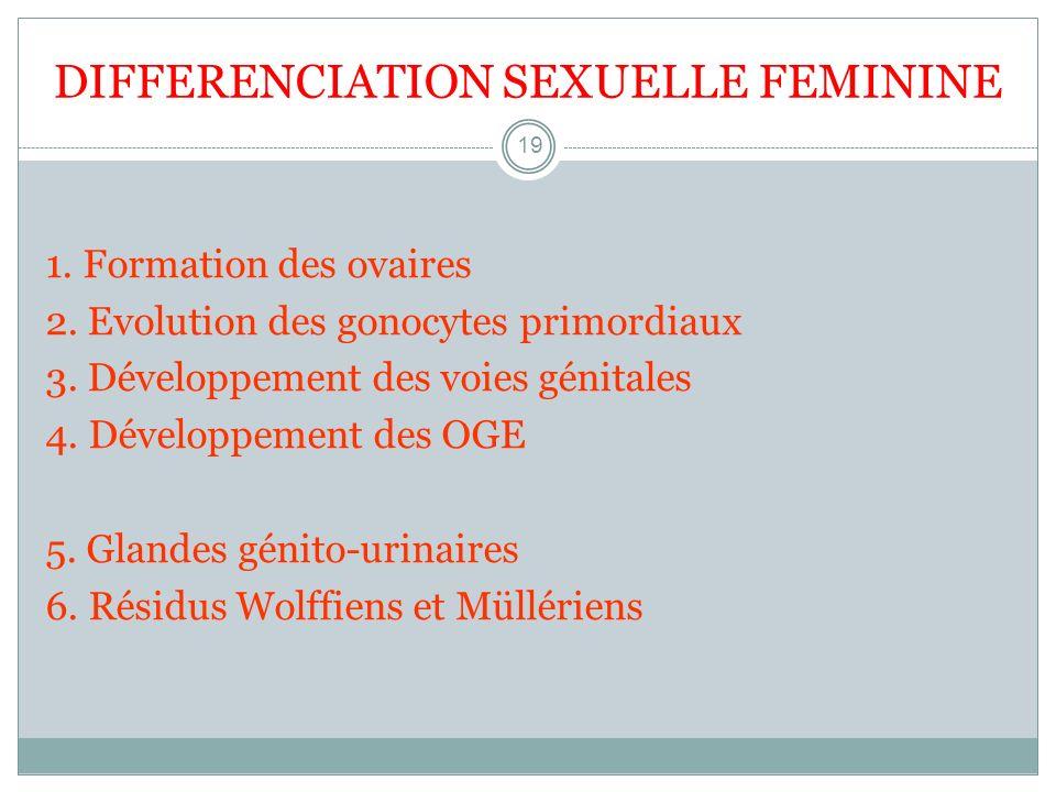 DIFFERENCIATION SEXUELLE FEMININE 19 1. Formation des ovaires 2. Evolution des gonocytes primordiaux 3. Développement des voies génitales 4. Développe