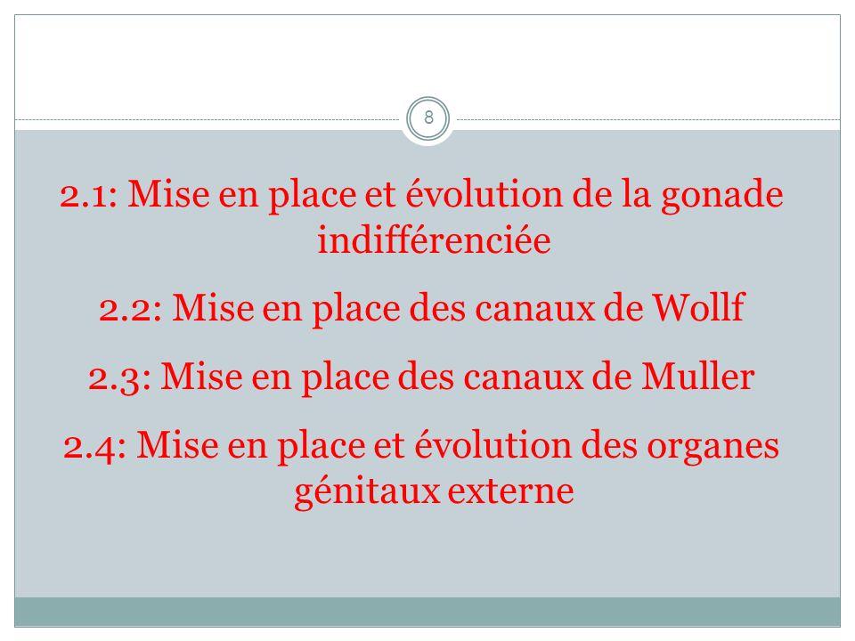 2.1: Mise en place et évolution de la gonade indifférenciée 2.2: Mise en place des canaux de Wollf 2.3: Mise en place des canaux de Muller 2.4: Mise e