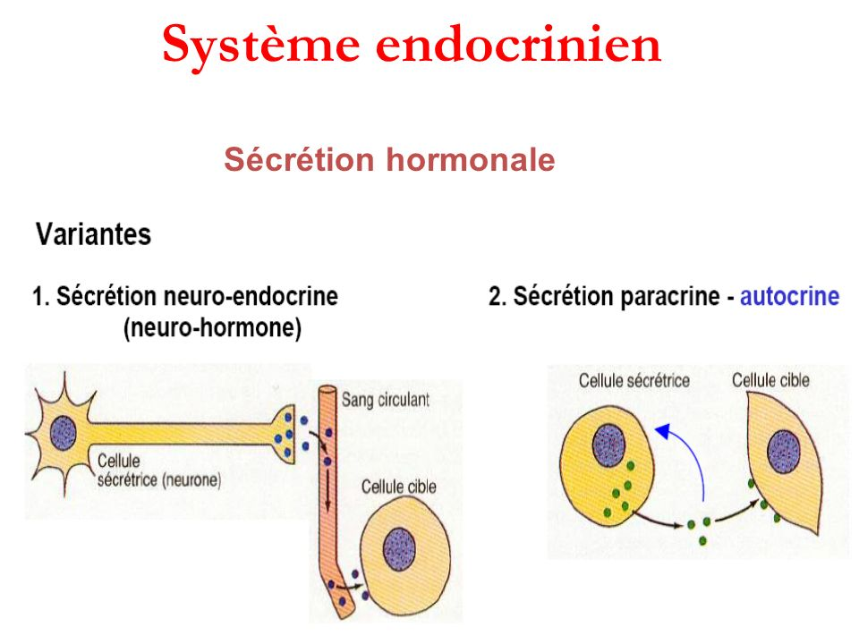 Mode daction des hormones