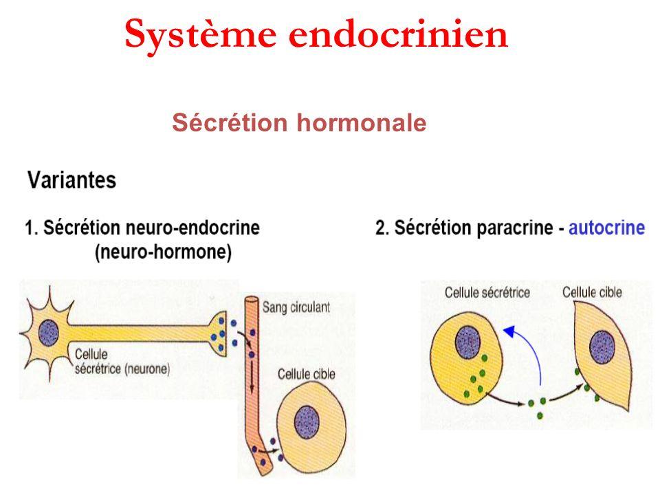 Système endocrinien Sécrétion hormonale