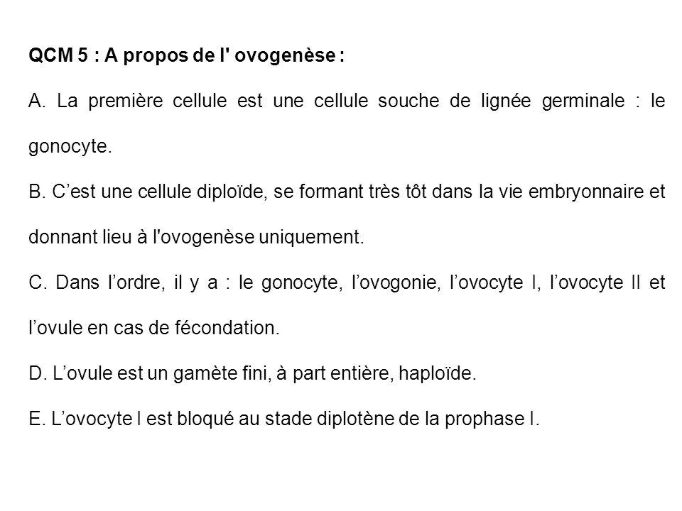 QCM 5 : A propos de l' ovogenèse : A. La première cellule est une cellule souche de lignée germinale : le gonocyte. B. Cest une cellule diploïde, se f