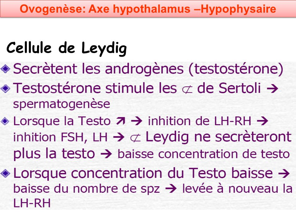 Cellule de Leydig Ovogenèse: Axe hypothalamus –Hypophysaire