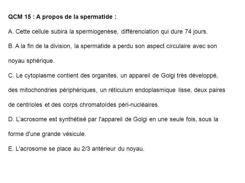 QCM 15 : A propos de la spermatide : A. Cette cellule subira la spermiogenèse, différenciation qui dure 74 jours. B. A la fin de la division, la sperm