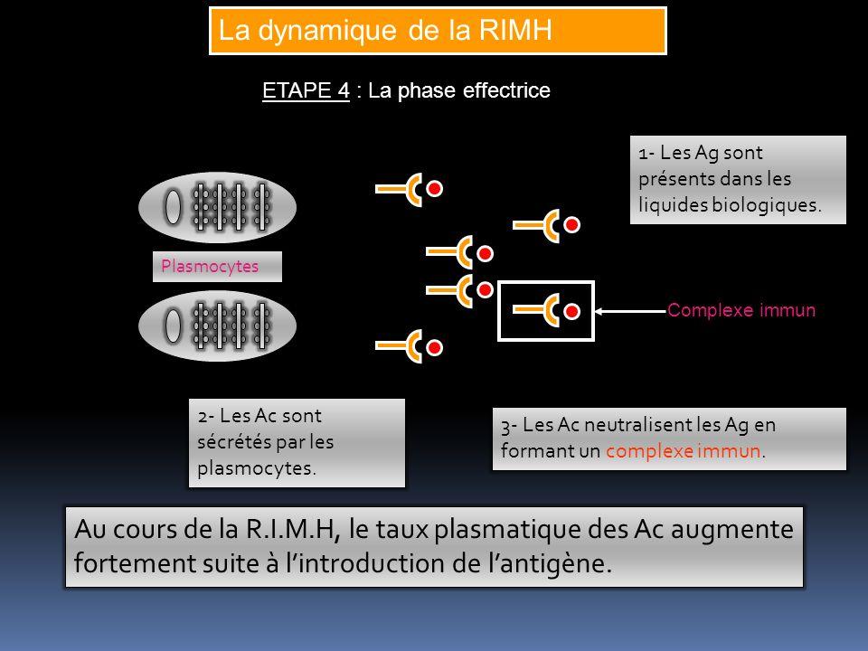La dynamique de la RIMH ETAPE 4 : La phase effectrice 2- Les Ac sont sécrétés par les plasmocytes. Plasmocytes 1- Les Ag sont présents dans les liquid