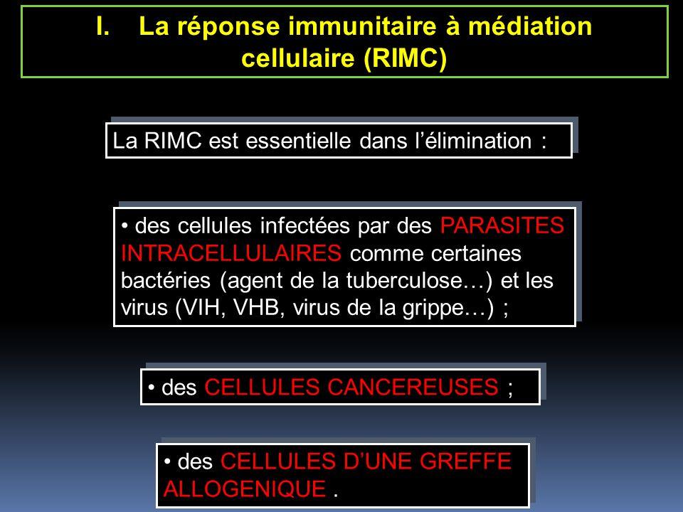 La RIMC est essentielle dans lélimination : La RIMC est essentielle dans lélimination : I.La réponse immunitaire à médiation cellulaire (RIMC) des cellules infectées par des PARASITES INTRACELLULAIRES comme certaines bactéries (agent de la tuberculose…) et les virus (VIH, VHB, virus de la grippe…) ; des cellules infectées par des PARASITES INTRACELLULAIRES comme certaines bactéries (agent de la tuberculose…) et les virus (VIH, VHB, virus de la grippe…) ; des CELLULES CANCEREUSES ; des CELLULES CANCEREUSES ; des CELLULES DUNE GREFFE ALLOGENIQUE.