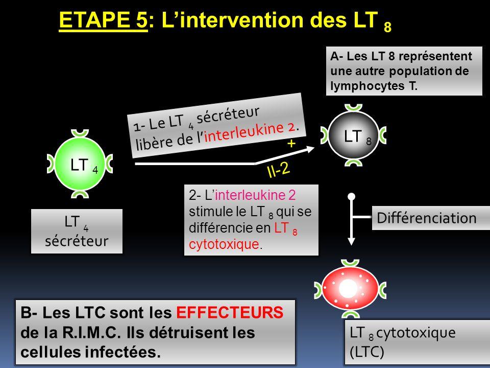 LT 8 ETAPE 5: Lintervention des LT 8 LT 8 cytotoxique (LTC) 1- Le LT 4 sécréteur libère de linterleukine 2.2. 2- Linterleukine 2 stimule le LT 8 qui s