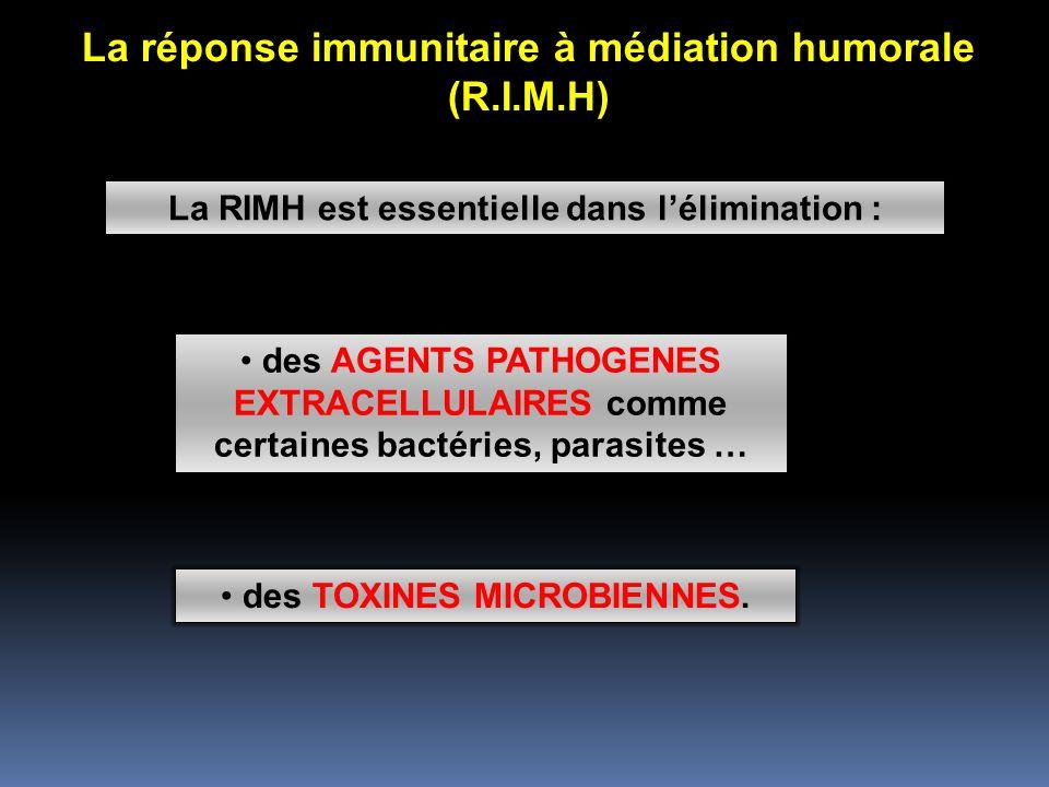La réponse immunitaire à médiation humorale (R.I.M.H) La RIMH est essentielle dans lélimination : des AGENTS PATHOGENES EXTRACELLULAIRES comme certaines bactéries, parasites … des TOXINES MICROBIENNES.