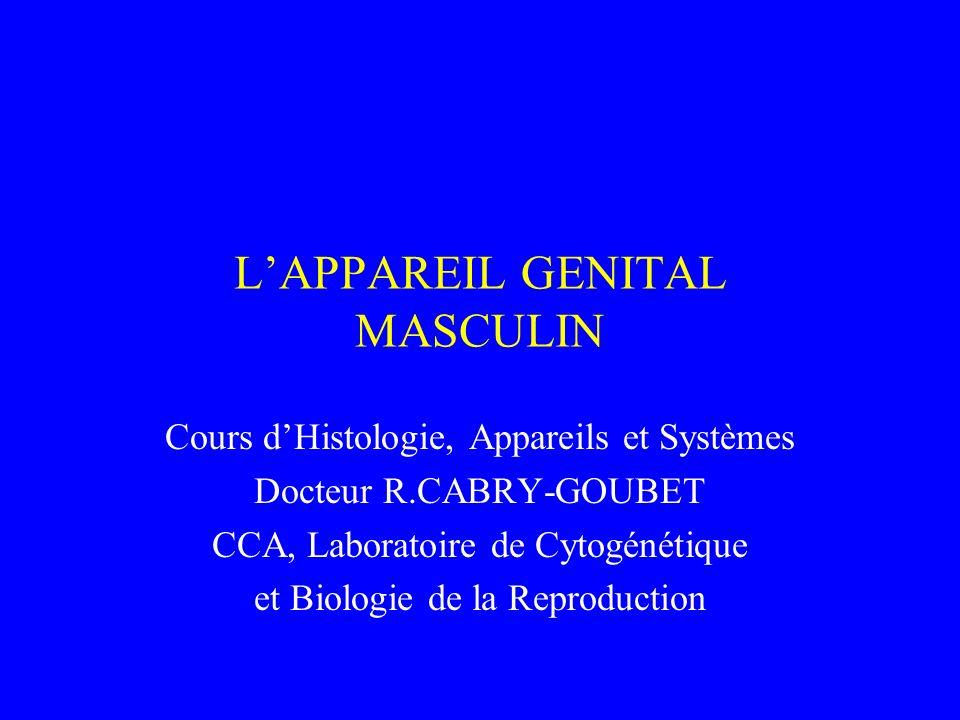 LAPPAREIL GENITAL MASCULIN Cours dHistologie, Appareils et Systèmes Docteur R.CABRY-GOUBET CCA, Laboratoire de Cytogénétique et Biologie de la Reprodu