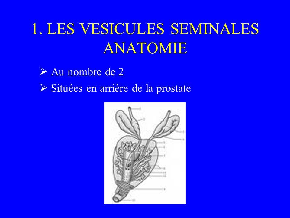 1. LES VESICULES SEMINALES ANATOMIE Au nombre de 2 Situées en arrière de la prostate