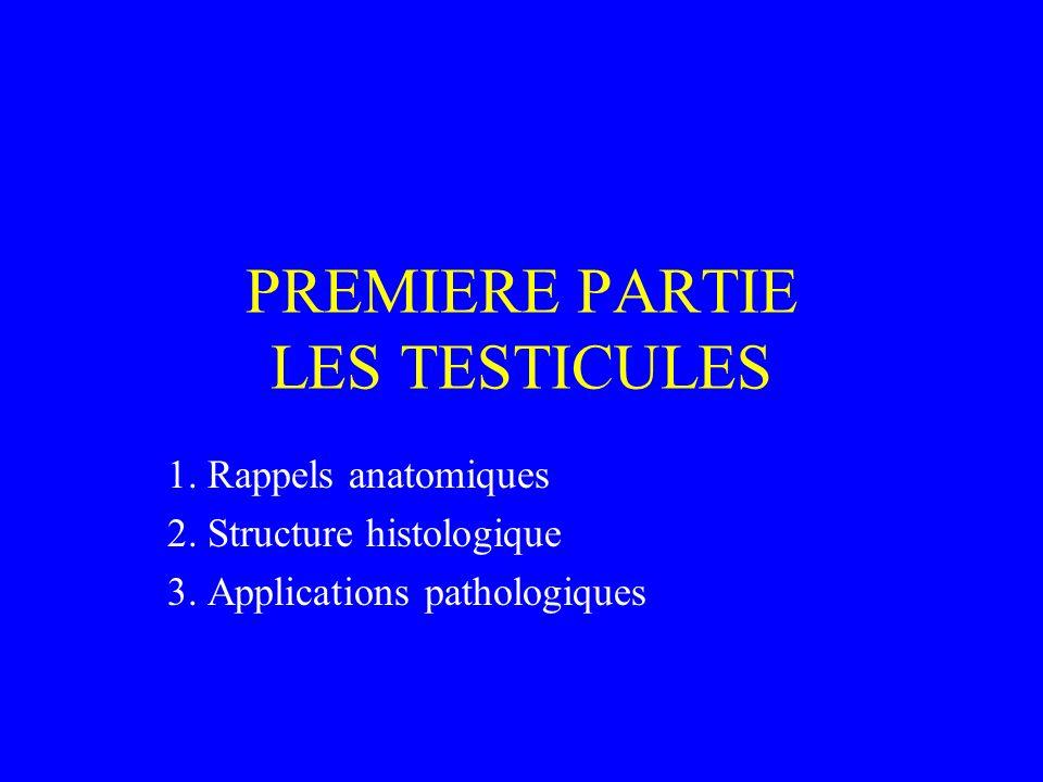 PREMIERE PARTIE LES TESTICULES 1. Rappels anatomiques 2. Structure histologique 3. Applications pathologiques